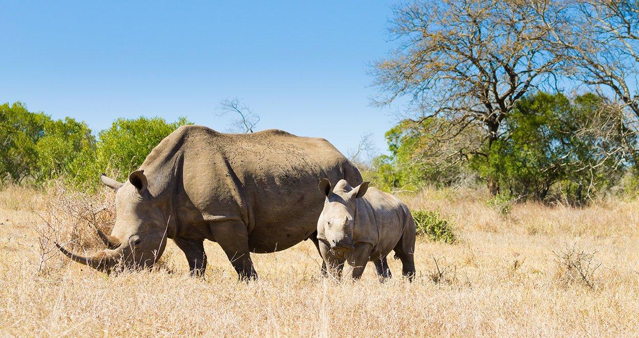 Bezienswaardigheid Hluhluwe Nationaal Park - Zuid-Afrika