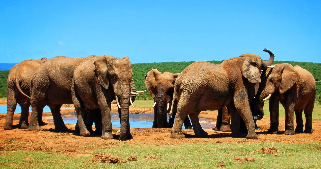 Bezienswaardigheid Addo Elephant Nationaal Park - Zuid-Afrika