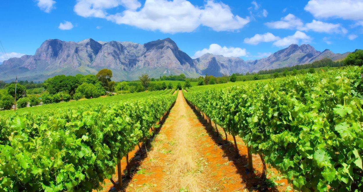 Bezienswaardigheid Kaapse wijnlanden - Zuid-Afrika