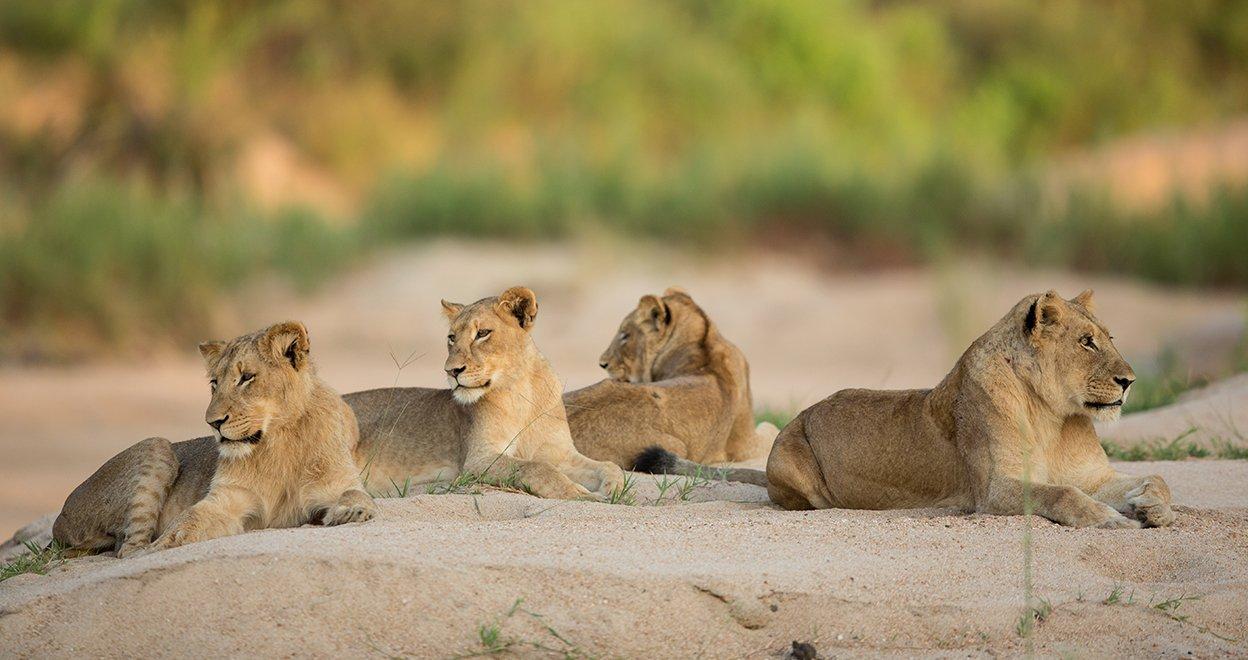 Bezienswaardigheid Kruger Nationaal Park - Zuid-Afrika