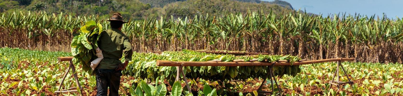 Tabak Plantage Viñales