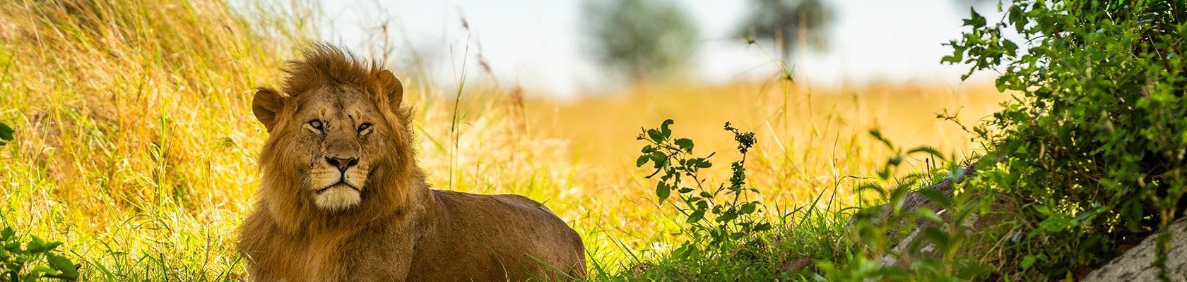 Serengeti Nationaal Park (Tanzania)