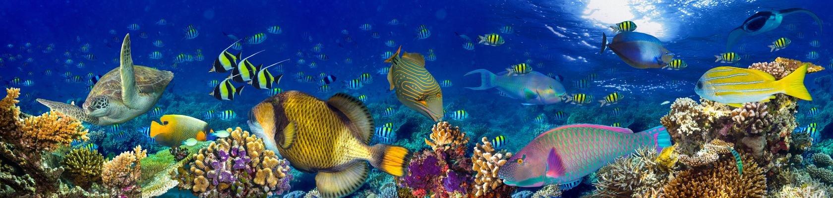 Onderwaterwereld bij Pemuteran