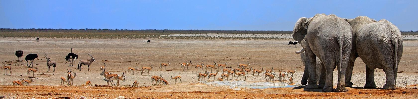 Etosha Nationaal Park (Namibië)