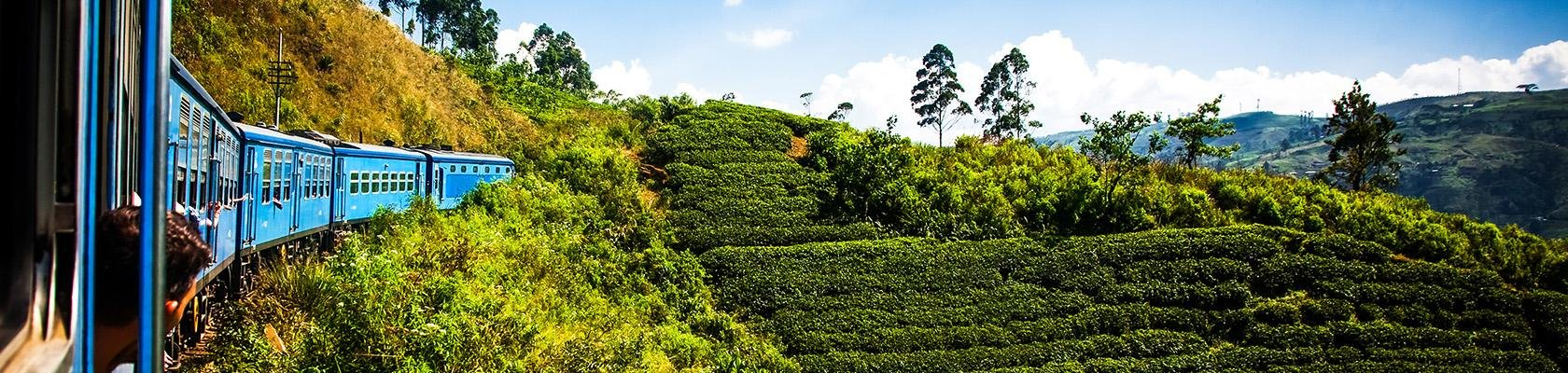 Relaxte rondreizen Sri Lanka