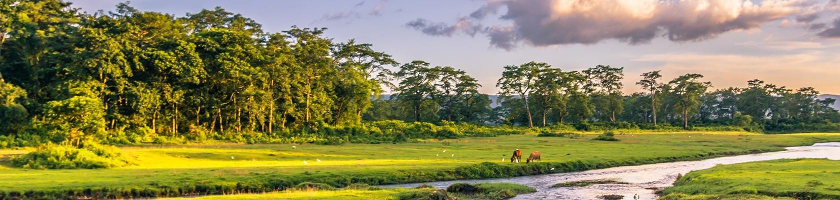 Chitwan Nationaal Park (Nepal)