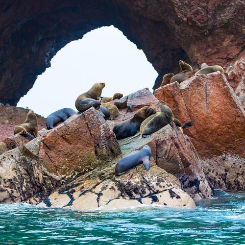 Pisco, Ballestas eilanden