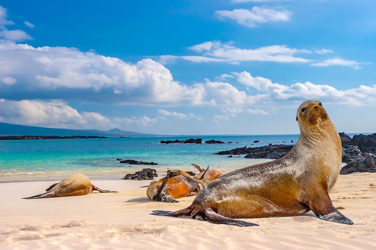 Galápagos NP